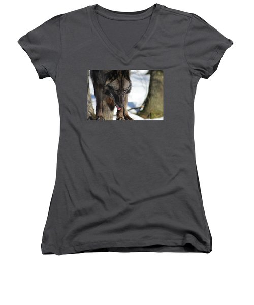 Alaskan Tundra Wolf Women's V-Neck T-Shirt