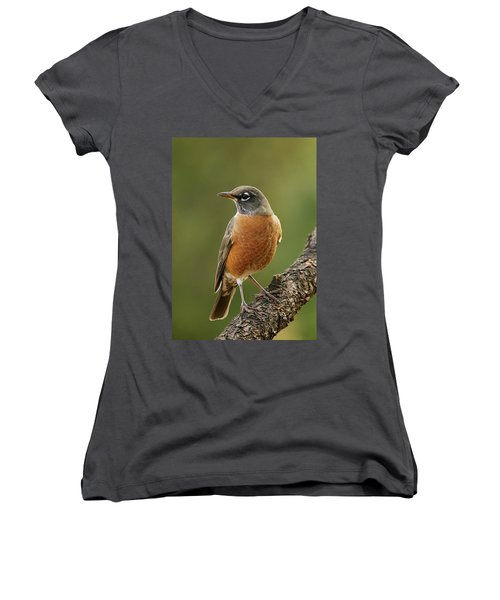 American Robin Women's V-Neck T-Shirt (Junior Cut) by Doug Herr