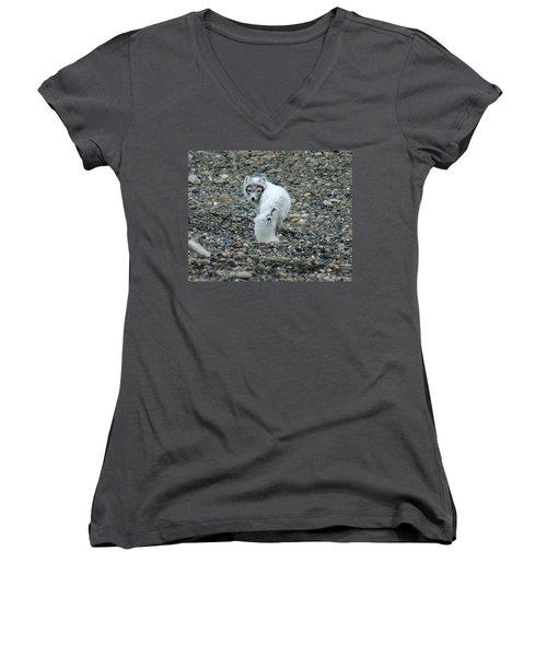 Arctic Fox Women's V-Neck T-Shirt (Junior Cut) by Anthony Jones