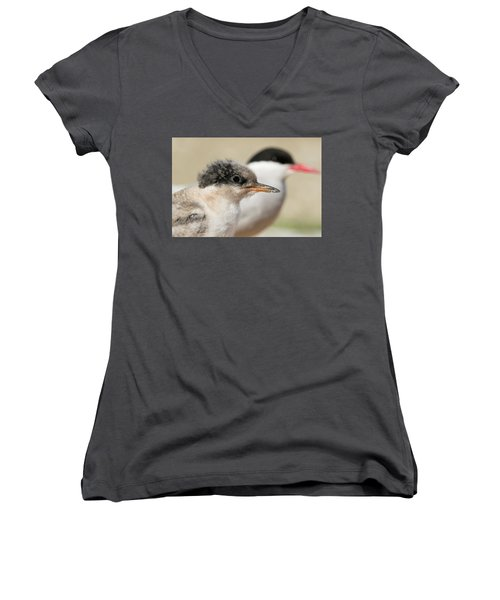 Arctic Tern Chick With Parent - Scotland Women's V-Neck