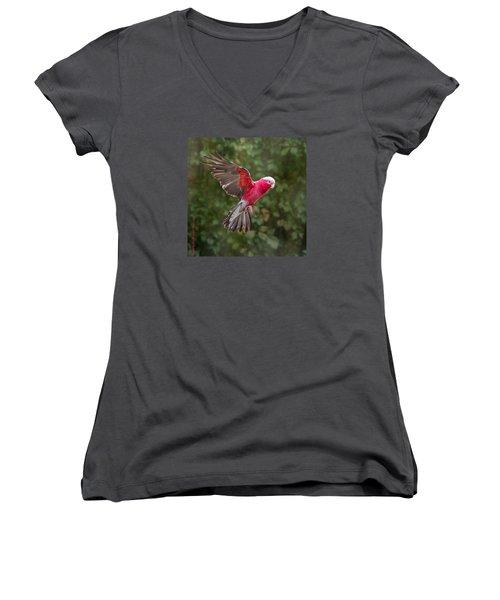 Australian Galah Parrot In Flight Women's V-Neck T-Shirt (Junior Cut) by Patti Deters