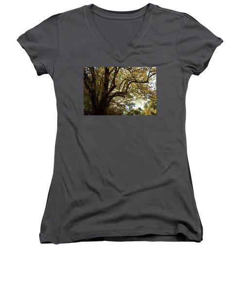 Autumn Branches Women's V-Neck T-Shirt