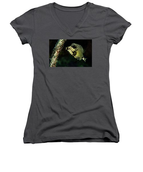 Women's V-Neck T-Shirt (Junior Cut) featuring the photograph Baby Trunk Fish by Jean Noren