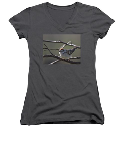 Women's V-Neck T-Shirt (Junior Cut) featuring the photograph Backlit Chipping Sparrow by Susan Capuano