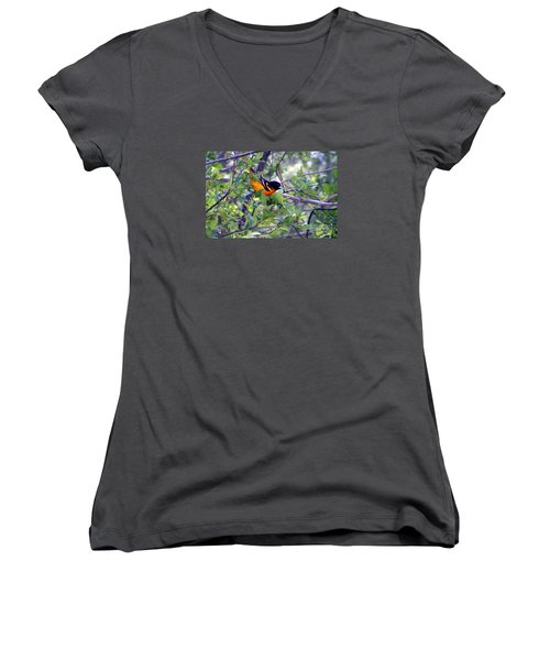 Baltimore Northern Oriole Women's V-Neck T-Shirt (Junior Cut) by Susan  Dimitrakopoulos