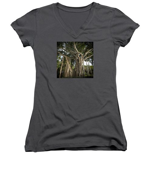 Banyan Tree At Bonnet House Women's V-Neck