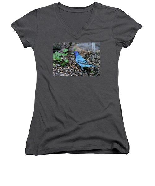 Beautiful Indigo Bunting Women's V-Neck T-Shirt