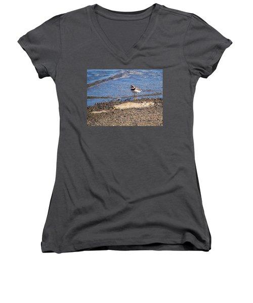 Birds Of Maine Women's V-Neck T-Shirt (Junior Cut) by Trace Kittrell