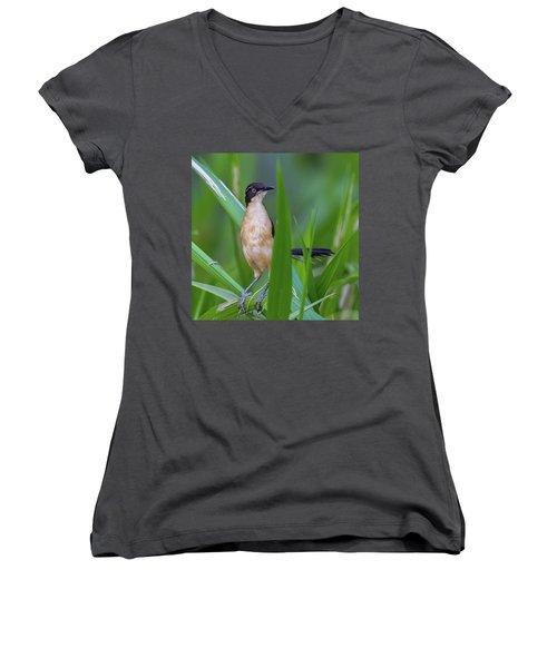 Black-capped Donacobius Women's V-Neck T-Shirt