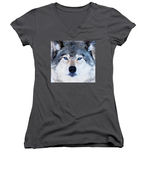 Women's V-Neck T-Shirt (Junior Cut) featuring the photograph Blue Eyed Wolf Portrait by Mircea Costina Photography