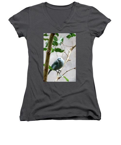 Blue-grey Tanager Women's V-Neck (Athletic Fit)