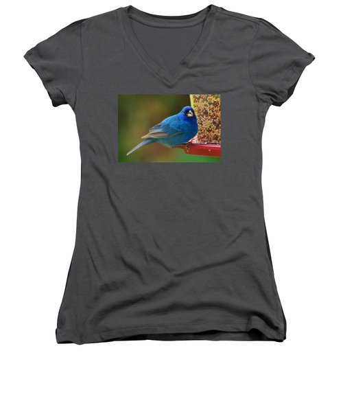 Indigo Bunting Women's V-Neck (Athletic Fit)