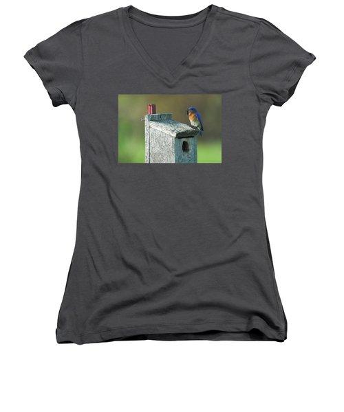 Women's V-Neck T-Shirt (Junior Cut) featuring the photograph Bluebird by Steve Stuller