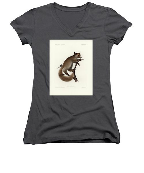 Brown Greater Galago Or Thick-tailed Bushbaby Women's V-Neck T-Shirt (Junior Cut) by Hugo Troschel and J D L Franz Wagner