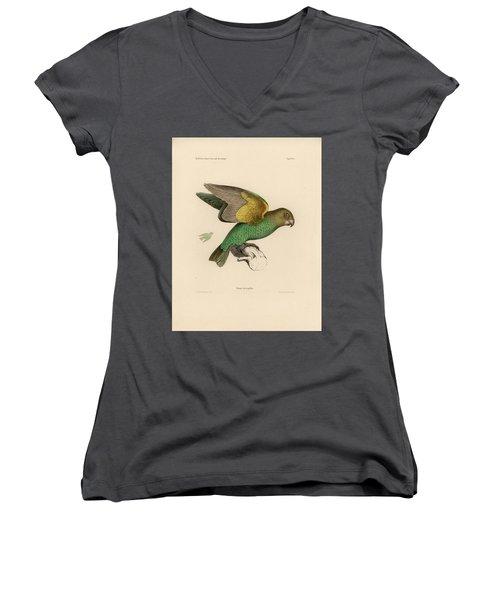 Brown-headed Parrot, Piocephalus Cryptoxanthus Women's V-Neck T-Shirt