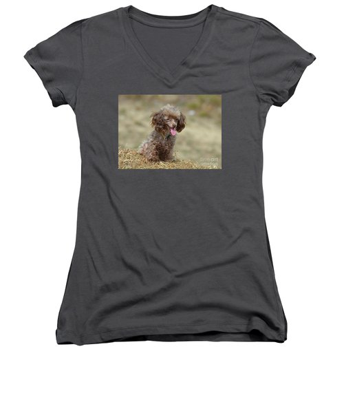 Brown Toy Poodle On Bail Of Hay Women's V-Neck T-Shirt