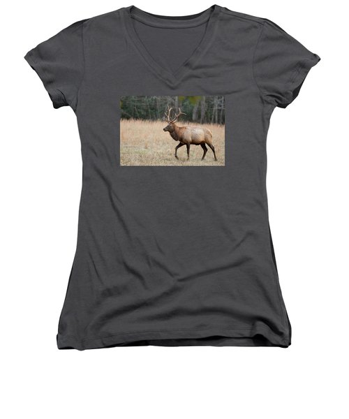Bull Elk Women's V-Neck (Athletic Fit)
