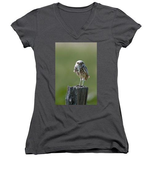 Burrowing Owl Women's V-Neck