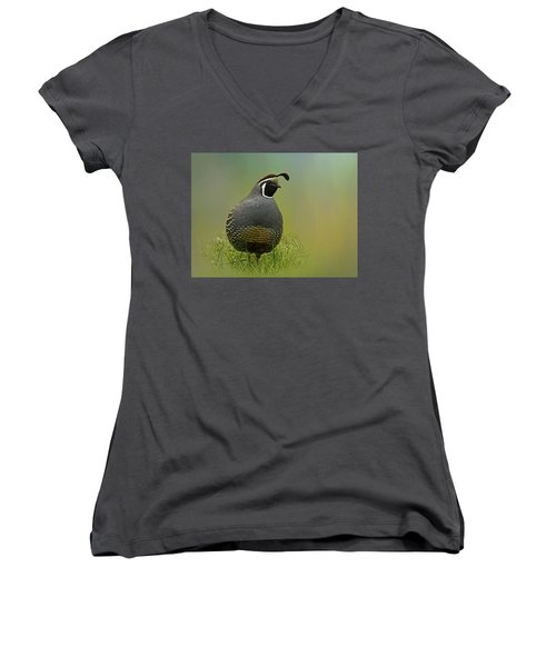 California Quail - 365-42 Women's V-Neck T-Shirt (Junior Cut) by Inge Riis McDonald