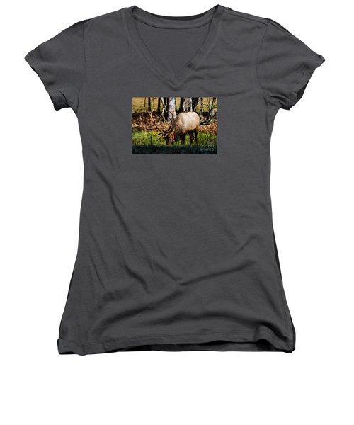 Cataloochee Elk Bull Women's V-Neck T-Shirt