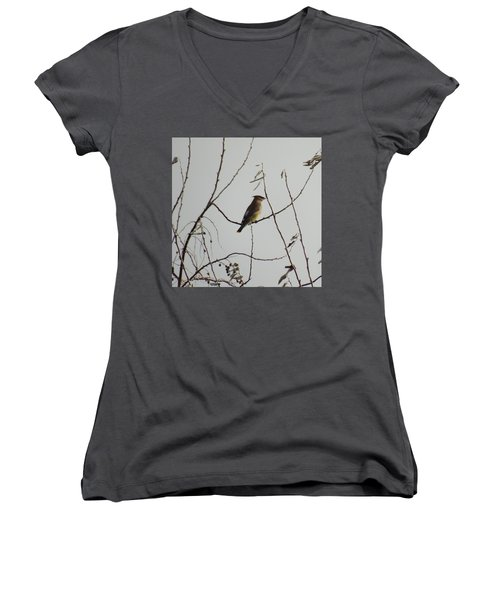Cedar Wax Wing In Tree Women's V-Neck T-Shirt