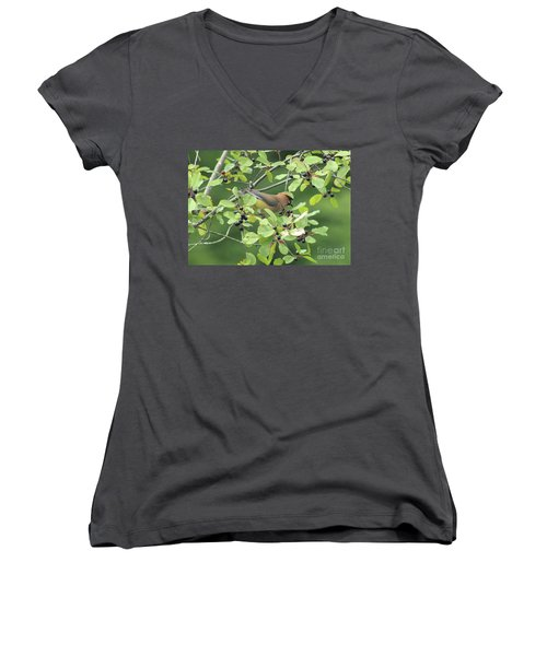 Cedar Waxwing Eating Berries Women's V-Neck T-Shirt (Junior Cut) by Maili Page