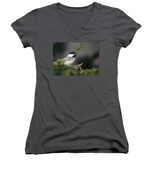 Women's V-Neck T-Shirt (Junior Cut) featuring the photograph Chickadee In Balsam Tree by Susan Capuano