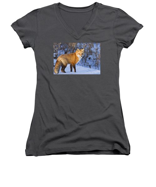 Christmas Fox Women's V-Neck T-Shirt (Junior Cut) by Mircea Costina Photography