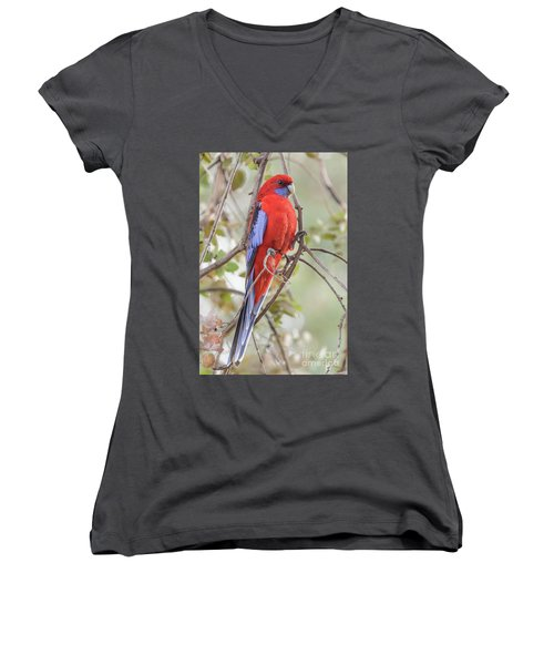 Crimson Rosella 01 Women's V-Neck