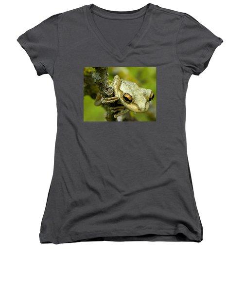 Cuban Tree Frog  Women's V-Neck T-Shirt (Junior Cut) by Chris Mercer