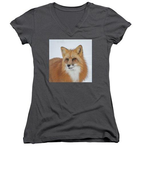 Curious Fox Women's V-Neck T-Shirt