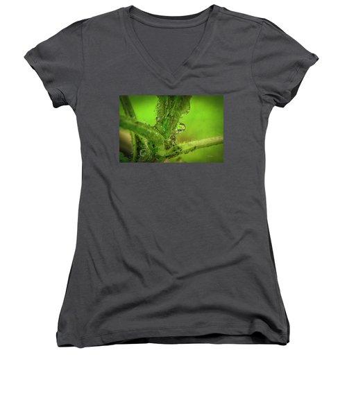 Dew Drop Closeup Women's V-Neck T-Shirt