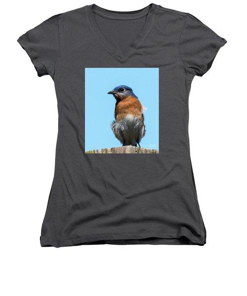 Eastern Bluebird Women's V-Neck