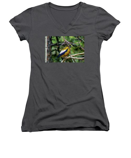 Evening Grosbeak On Aspen Women's V-Neck (Athletic Fit)