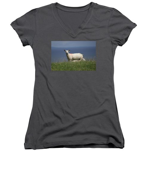 Ewe Guarding Lamb Women's V-Neck