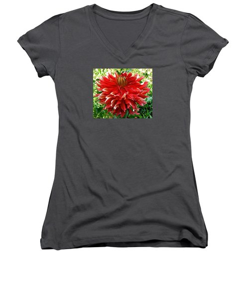 Fancy Red Dahlia Women's V-Neck T-Shirt