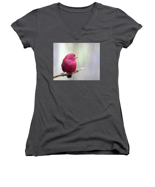 Fire Finch Women's V-Neck T-Shirt (Junior Cut) by Marion Cullen