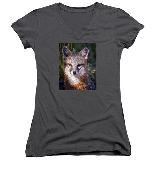 Fox Gaze Women's V-Neck T-Shirt (Junior Cut) by Alan Raasch