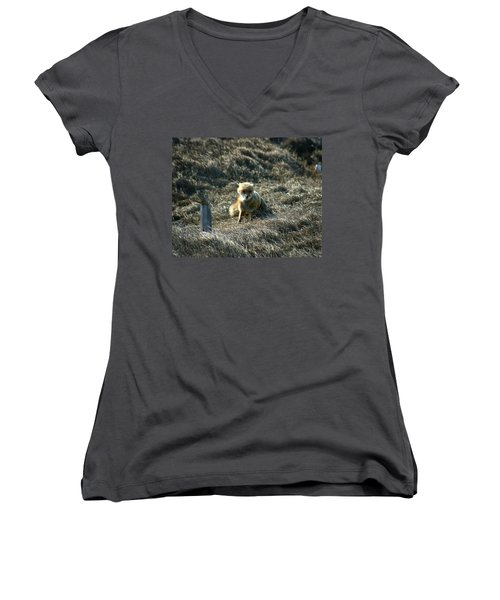 Fox In The Wind Women's V-Neck T-Shirt (Junior Cut) by Anthony Jones