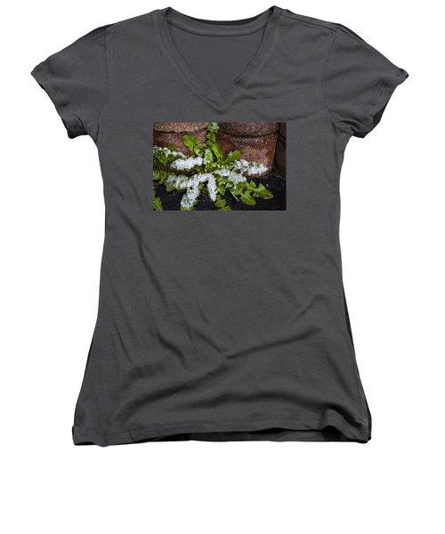Women's V-Neck T-Shirt (Junior Cut) featuring the photograph Frosted Dandelion Leaves by Deborah Smolinske