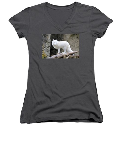 Furry Arctic Fox  Women's V-Neck T-Shirt (Junior Cut) by Athena Mckinzie