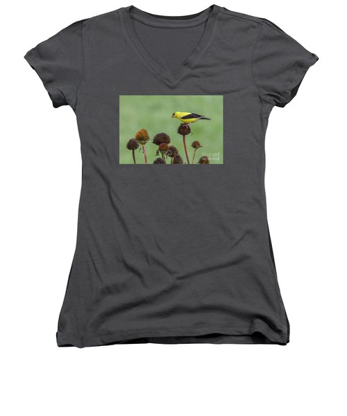 Goldfinch And Coneflowers Women's V-Neck T-Shirt