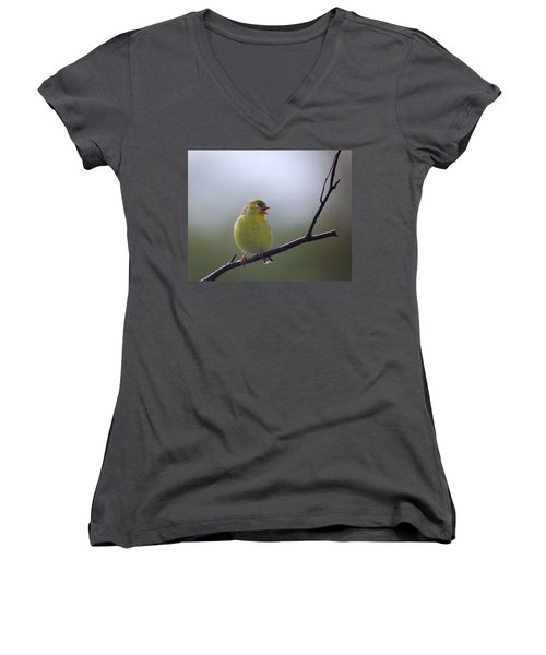 Women's V-Neck T-Shirt (Junior Cut) featuring the photograph Goldfinch Song by Susan Capuano