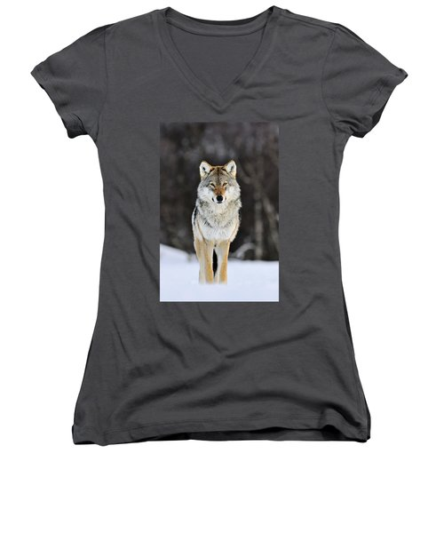 Gray Wolf In The Snow Women's V-Neck