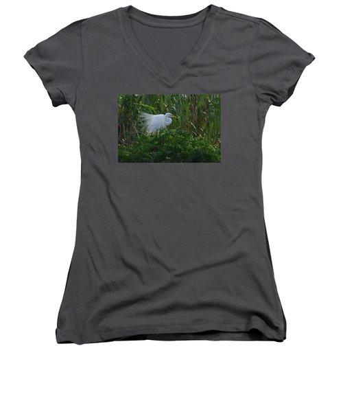 Great Egret Displays Windy Plumage Women's V-Neck T-Shirt