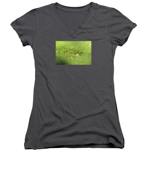 Green Frog Stony Brook New York Women's V-Neck T-Shirt (Junior Cut) by Bob Savage