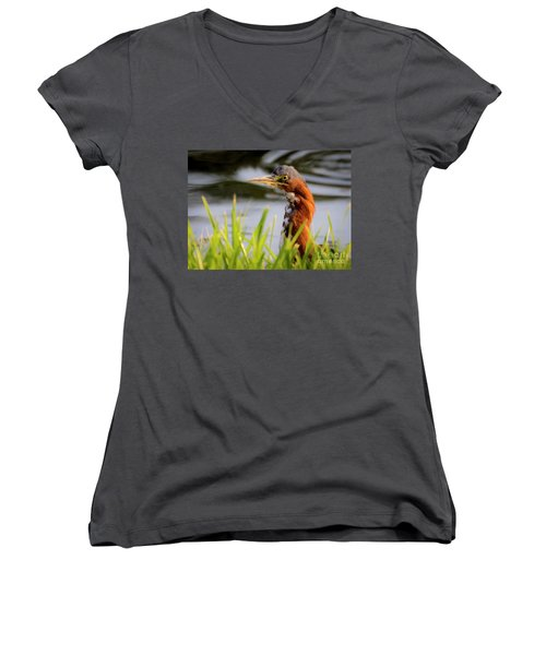 Green Heron Closeup  Women's V-Neck