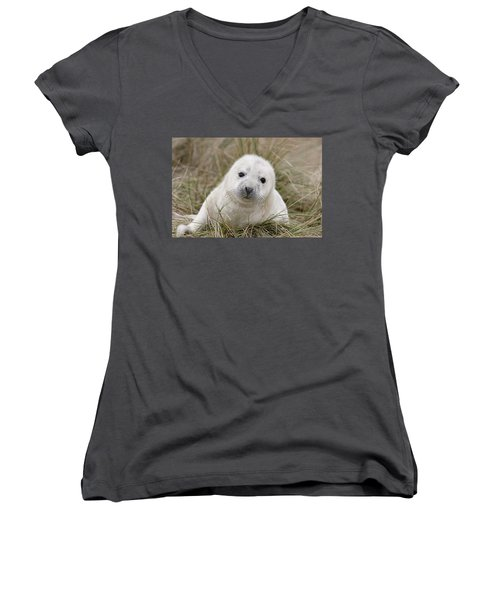Grey Seal Pup Women's V-Neck