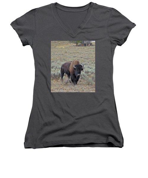 Handsome Bison Bull Women's V-Neck