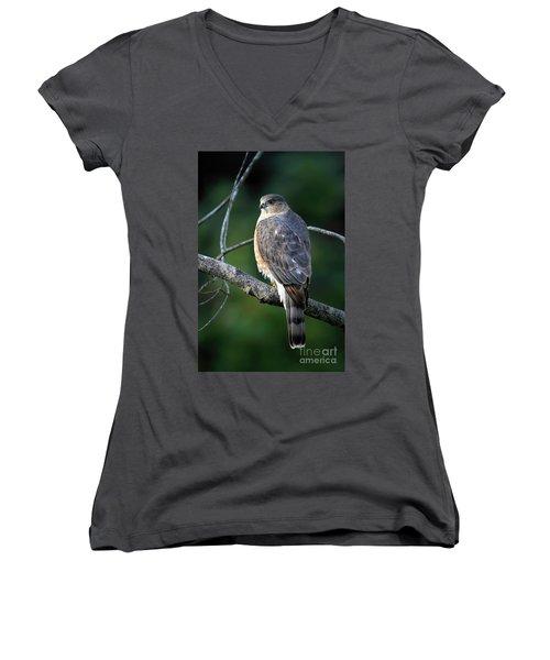 Handsome Sharp Shinned Hawk Women's V-Neck T-Shirt